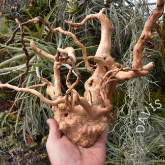 Hardwood root ball